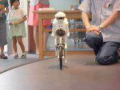 セイサクくんは、自転車が得意です!